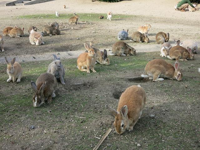 ウサギの楽園