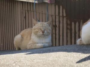 a Happy-Come-Come-Cat